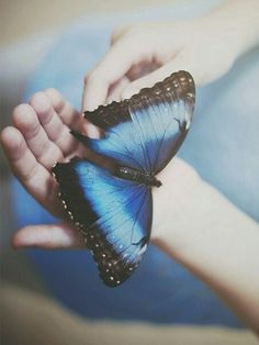 Find images and videos about beautiful, blue and nature on We Heart It - the app to get lost in what you love. Butterfly Effect, Butterfly Kisses, Blue Butterfly, Butterfly Images, Life Is Strange, Chloe Price, Photoshop, Blue Aesthetic, Ravenclaw