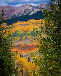 CB has the most incredible fall colors, mountains, views, and so much more! @huffingtonpost just named #CrestedButte 1/6 of the best places to view fall foliage. The leaves are incredible and vibrant right now, this weekend is going to be amazing! Photo: @chris_segal  #foliage #fall #autumn #cbcolors #vibrant #aspentrees #mountains #views #thisisheaven @visitcolorado