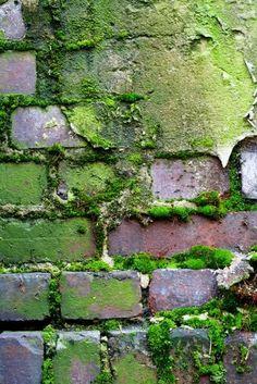 / moss / brick wall /