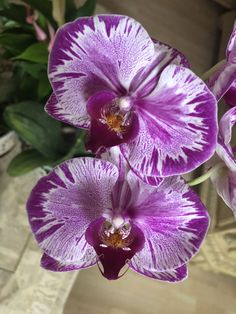 Whenever we approached the Flores & Prats company, we wanted to target on the accurate Purple Flowers, Rare Flowers, Beautiful Flowers Garden, Unusual Flowers, Amazing Flowers, Beautiful Flowers, Macro Photography Flowers, Orchid Flower, Orchidaceae