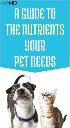 Cats and dogs have nutrition needs that change as your pet grows. A balanced diet with these nutritional components is crucial to keep your pet healthy.