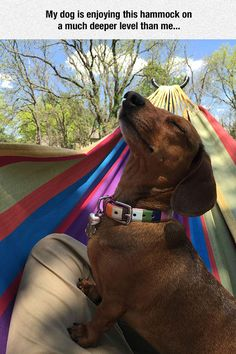 Dachshund Pup Basking Triumphantly In The Sun Sparks Hilarious Photoshop Battle Love My Dog, Puppy Love, Funny Animal Pictures, Funny Animals, Cute Animals, Animal Pics, Weenie Dogs, Doggies, Dachshund Love