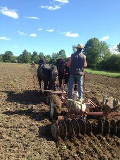 4 Horse Powered Crops at Reber Rock Farm