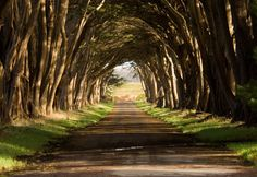 Pt Reyes National Seashore, CA Beautiful tree tunnel! Cypress Tree Tunnel, Cypress Trees, Visit California, California Travel, Europe Train Travel, Tunnel Of Love, Autumn Trees, Beautiful Gardens, Places To See