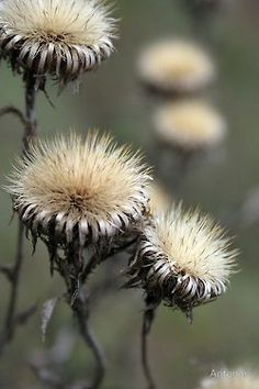 Zachte droge wilde bloemen