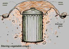 A way to store root vegetables for months without electricity.