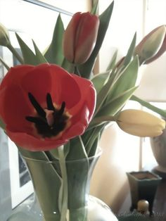 Red and Yellow Tulips by M.E.