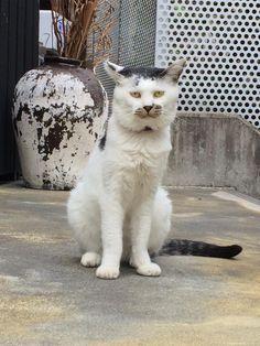 一度見たら癖になるような、じわじわくるようなネコに出会った。