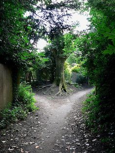 Two roads diverged in a yellow wood,  And sorry I could not travel both...    I shall be telling this with a sigh  Somewhere ages and ages hence:  Two roads diverged in a wood, and I--  I took the one less traveled by,  And that has made all the difference.    -Robert Frost