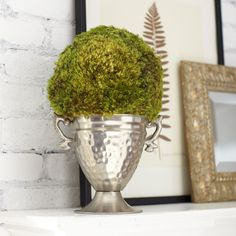 Latham Preserved Moss Round Topiary