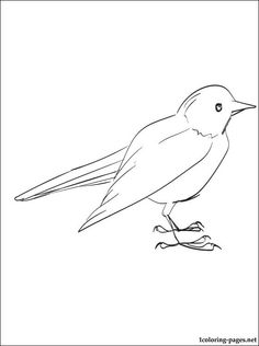 Blackbird Coloring Page For Free | Coloring Pages