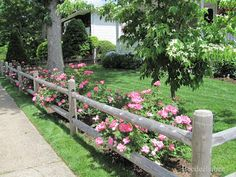 She has planted what I've always envisioned for years - a split rail fence lined with rosebushes - and it's just a gorgeous as I always imagined! Beedeebabee: Just a little catching up...