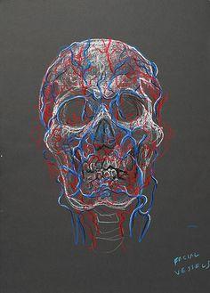 Skull - Facial Vessels, by Fred Hatt Gcse Art Sketchbook, Textiles Sketchbook, Dibujos Dark, Human Anatomy Art, Art Alevel, Medical Art, A Level Art, Ap Art, Chalk Pastels