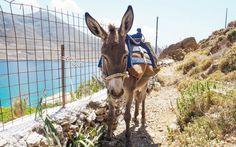 © Carina Dieringer Naxos, Goats, Animals, Greek Islands, Greece, Animales, Animaux, Animal, Animais