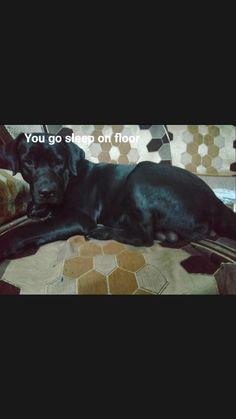 Yellow Lab Puppies, Black Labrador Dog, Labradoodle, Color Pop, Labrador Retriever, Dogs, Animals, Labrador Retrievers, Animales