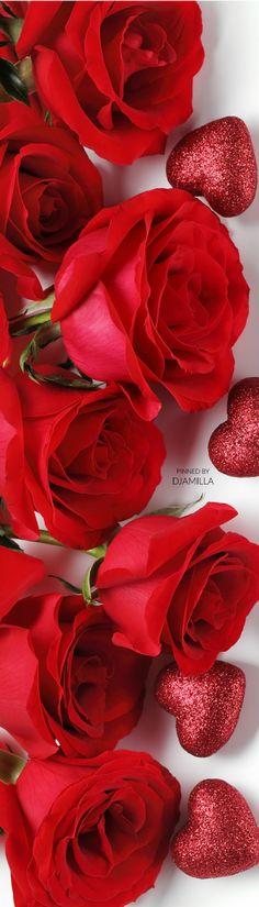 Happy Valentine's Day Roses