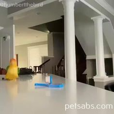 smarty birdy plays with toys