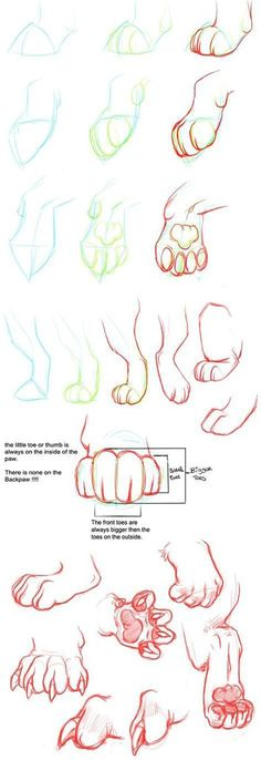 How to draw a paw