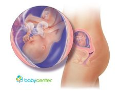 What your baby looks like at 18 weeks @babycenter
