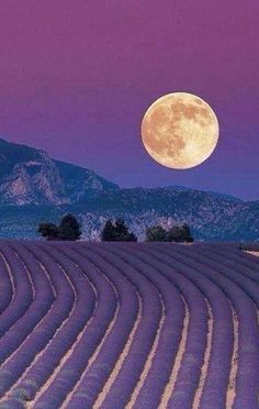 May's Full Flower Moon - Lavender Fields: Provence, France. Beautiful Moon, Beautiful World, Beautiful Places, Beautiful Pictures, Valensole, Shoot The Moon, Provence France, Belle Photo, Beautiful Landscapes