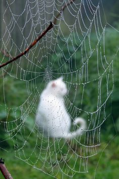 °Caught in a Web by ChristineNZ