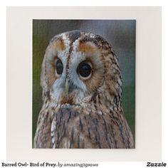 Barred Owl- Bird of Prey. Jigsaw Puzzle