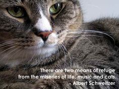 """There are two means of refuge from the miseries of life: music and cats."" - Albert Schweitzer #cats #pets #life"