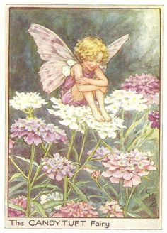 The Candytuft Fairy | Flower-Fairies-of-the-Garden | Welland Antiques ...