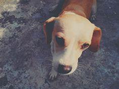 My dog :) #Tucha