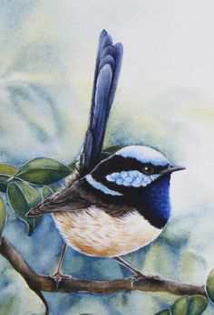 This beautiful wrens have been prolific in my garden recently, constantly chasing each other and vying for attention. I have painted these wrens in the branches of a Lily Pily tree., by CatherineCastle Watercolor Bird, Watercolor Paintings, Bird Artwork, Australian Animals, Bird Pictures, Little Birds, Wildlife Art, Wild Birds, Beautiful Birds