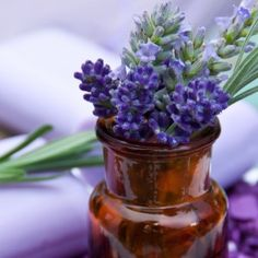 DIY Lavender Thieves Oil