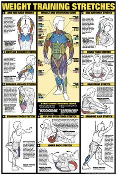 Weight Training Stretches Poster - Laminated in Fitness Charts