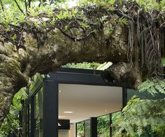 Forest-home-in-new-zealand-by-chris-tate-..nestle your home in your garden