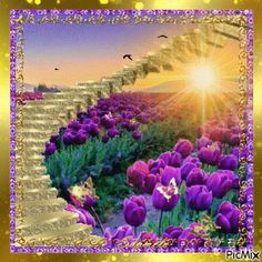 The perfect Photo Frame Purple Animated GIF for your conversation. Discover and Share the best GIFs on Tenor. Beautiful Gif, Beautiful Sunrise, Beautiful Flowers, Beautiful Scenery, Flowers Gif, Purple Flowers, Gifs, Butterfly Gif, Butterflies