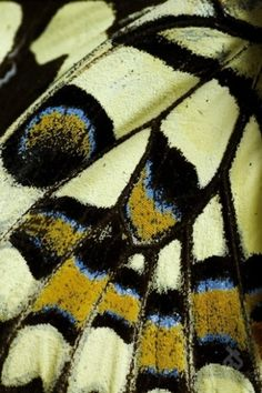 #cool #pattern in nature : #texture and vibrant colors of a #butterly wing
