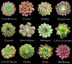 Assorted types of succulents #5