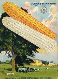 "The back cover of the 1922 Farmer Seed & Nursery catalog boasted quite a promise alongside the colorful image of ears of its  corn varieties.  Just below the herd of cows is a modest promise, ""Prosperity abounds where our corn is grown.""   Farmer Seed & Nursery originated in Faribault, MN in 1888. Andersen Horticultural Library hosts a collection of historic seed catalogs."