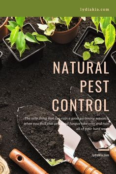 Natural Pest Control For Your Garden — Lydia Kia Organic Gardening, Gardening Tips, Organic Farming, List Of Essential Oils, Lemongrass Oil, Oregano Oil, Soil Improvement, Pest Solutions, Square Foot Gardening