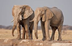 Botswana Photos – Award winning images & pictures!