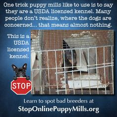 This is a USDA licensed kennel. Puppy Mill Rescue, Rescue Dogs, Animal Rescue, Buy Puppies, Little Puppies, Hurt Locker, Work Horses, Stop Animal Cruelty, Cairn Terrier
