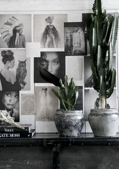 Picture wall and cactus Cactus Y Suculentas, Interior Design Inspiration, Inspiration Wall, Sweet Home, Picture Wall, Photo Wall, Interior Exterior, Green Plants, Interior Styling