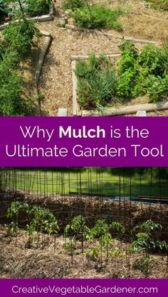 Organic Vegetable Gardening Vegetable garden mulch is the ultimate tool for creating a healthy, low maintenance, and beautiful garden. If you're not mulching, you need to start now. Mulch For Vegetable Garden, Garden Mulch, Herbs Garden, Garden Path, Organic Vegetables, Growing Vegetables, Gardening Vegetables, Organic Gardening Tips, Gardening Hacks