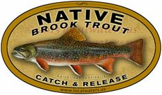 Native Brook Trout Decal catch release fishing sticker - Durable outdoor rated for 3+ years laminated UV and waterproof, Car Wash Safe - kayaks trucks