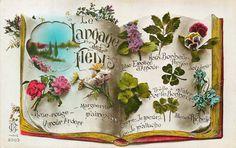 Le Langage des Fleurs. Vintage postcard.