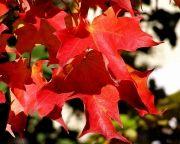 Leaf Peeping Guide
