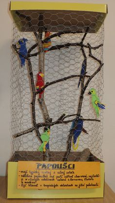 Ráj papoušků - voliéra z krabice od bot