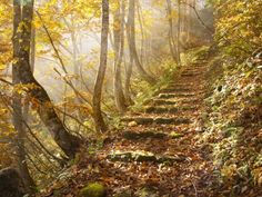 This gives me chills... this photo captures the haunted beauty of Autumn.