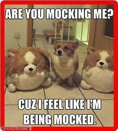 Funny Corgi Dog Mocking Refrigerator / Tool Box Magnet Cute Animal Memes, Funny Animal Quotes, Animal Jokes, Cute Funny Animals, Cute Dogs, Animal Captions, Dog Quotes, Funniest Animals, Animal Humour