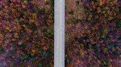 Colorful Autumn Wood and Bridge Road | #desktop #wallpapers #DesktopWallpaper #nature #autumn #bridge #colorful #road #trees #wood