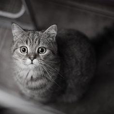 cat by Cat Box2011, via Flickr